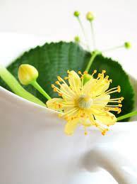 5 remedios naturales cuidarse